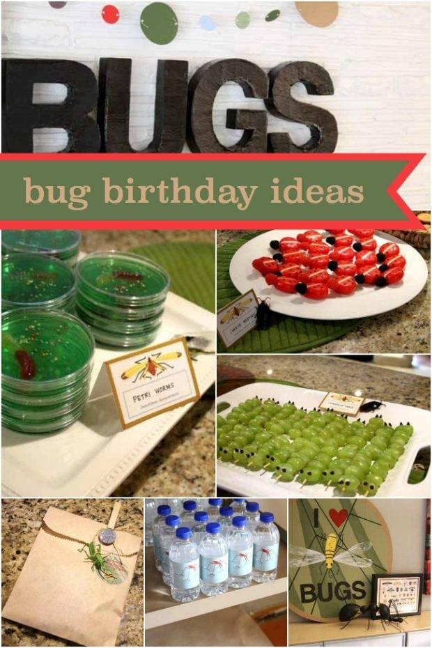 Boy S 6th Birthday Bug Themed Birthday Spaceships And