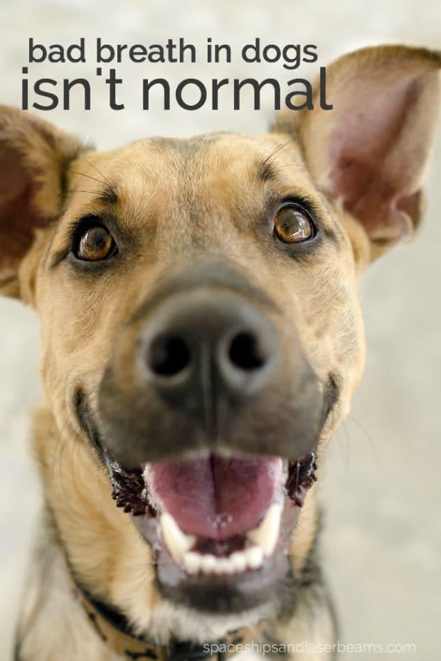 Dental Disease in Dogs