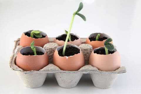 Use egg shells as plant starter holders.
