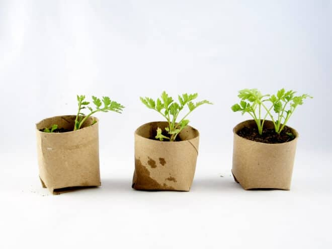 Make your own Biodegradable Toilet Paper Roll Planters