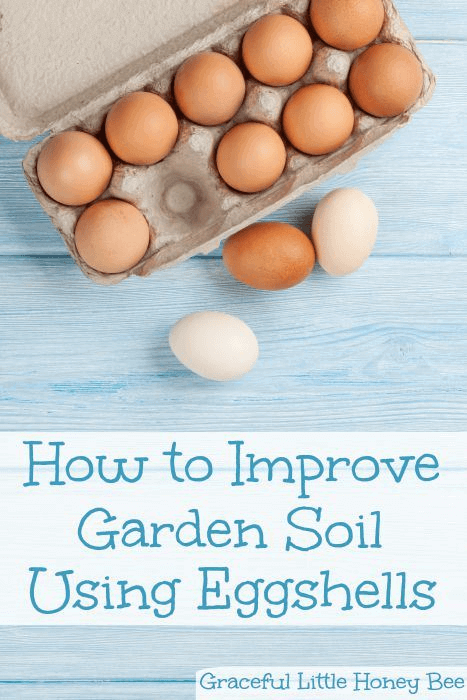 Don't waste your egg shells! Use them to get calcium rich soil.