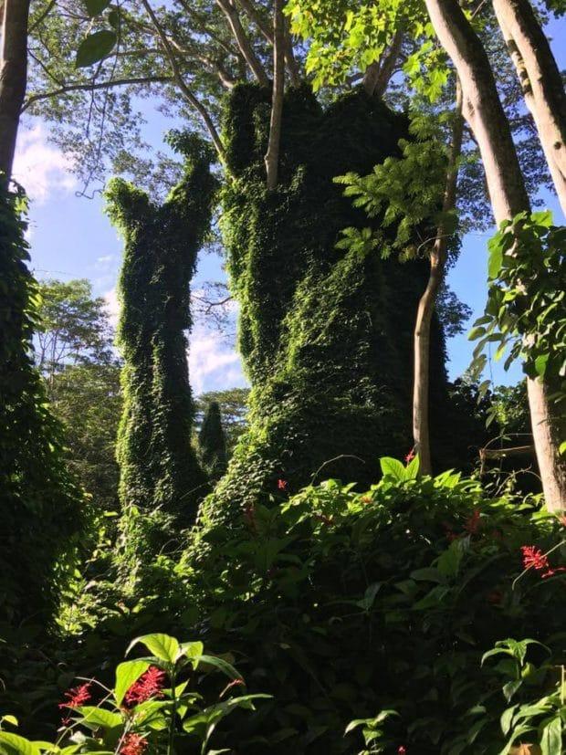 Hiking Trip in Kauai