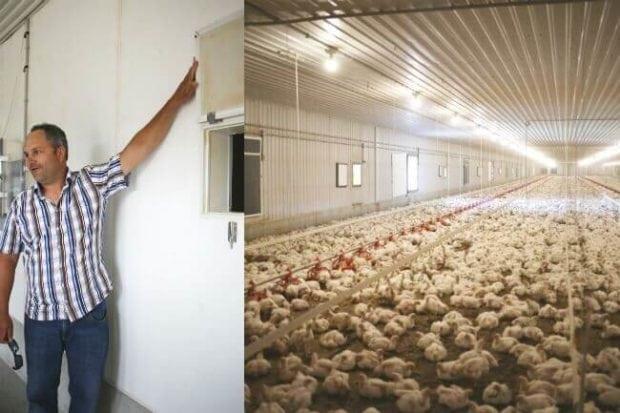 KFC Canada Chicken Farm