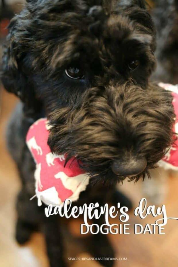 Valentine's Day Doggie Date