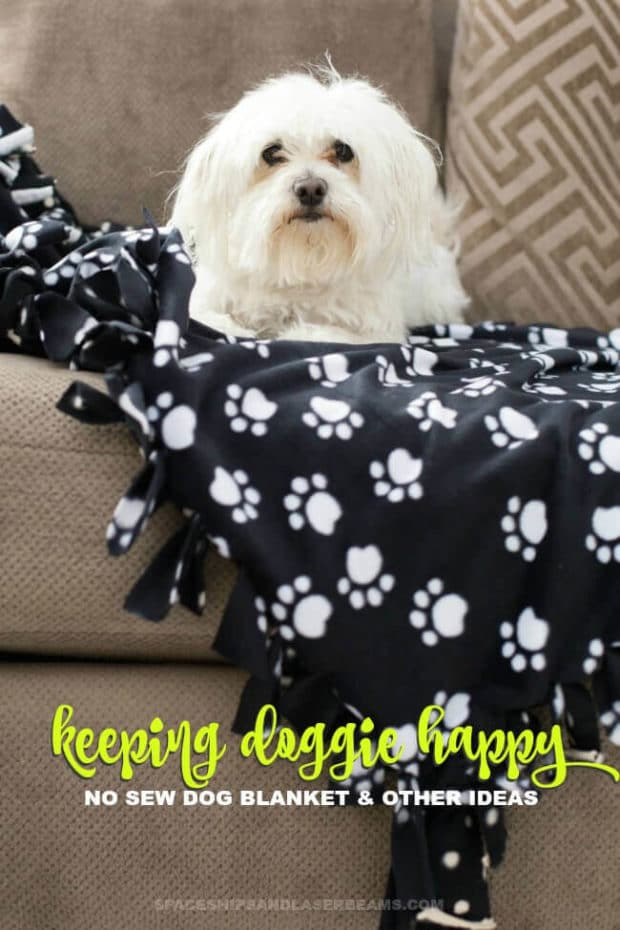 Keeping Doggie Happy: No Sew Blanket + More Ideas