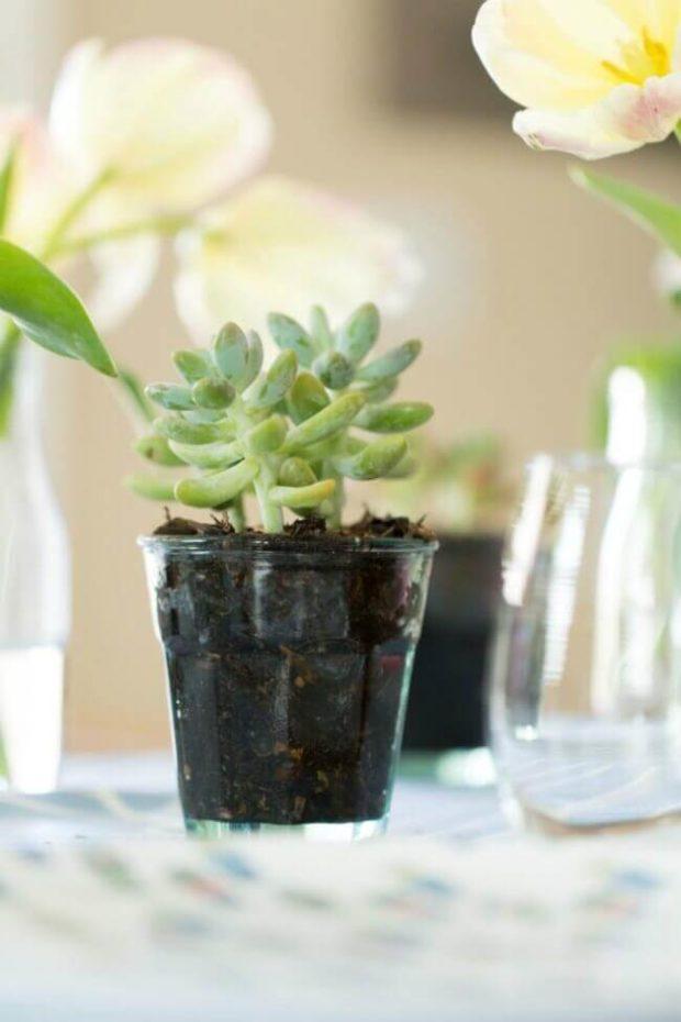 Centerpiece Succulent