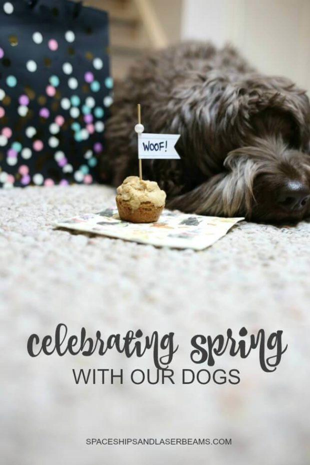 Celebrating Spring with Our Dogs