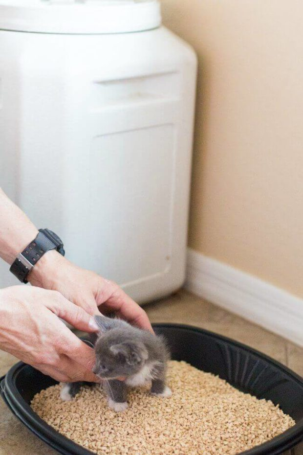 Clay Clumping Kitty Litter