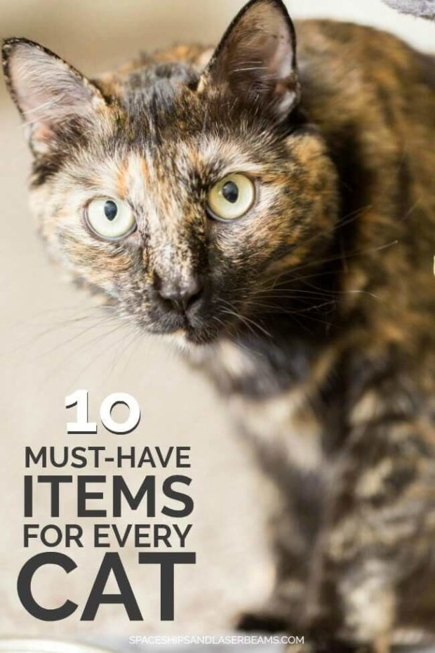 10 Must Have Items for Every Cat