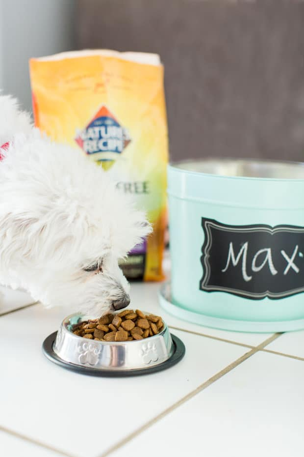 Easy DIY Dog Food Container