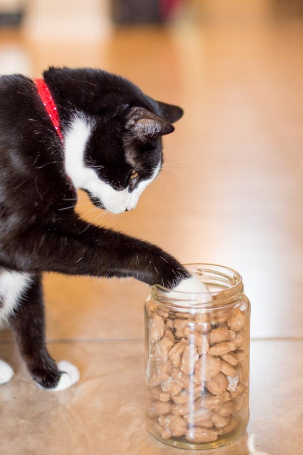 Best Homemade Cat Treats