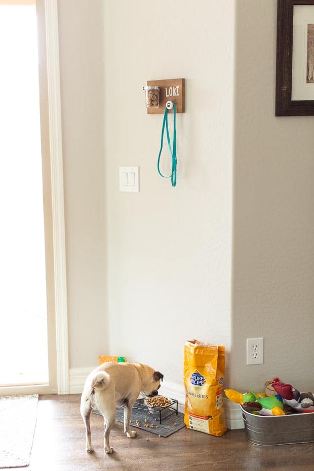 Easy DIY for Dog Supplies