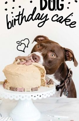 dog birthday cake on a cake dish with a dog eating it