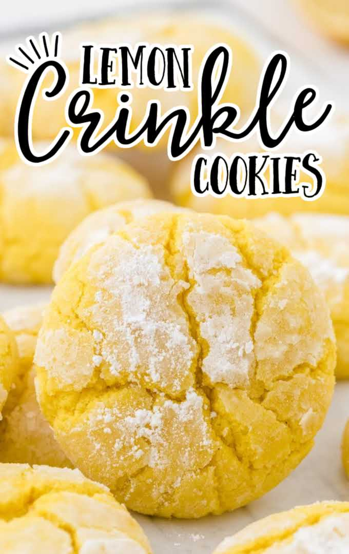 close up shot of lemon crinkle cookies on a cookie sheet